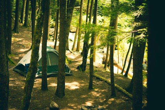 Terrain 1 tente (Érabière Nord)